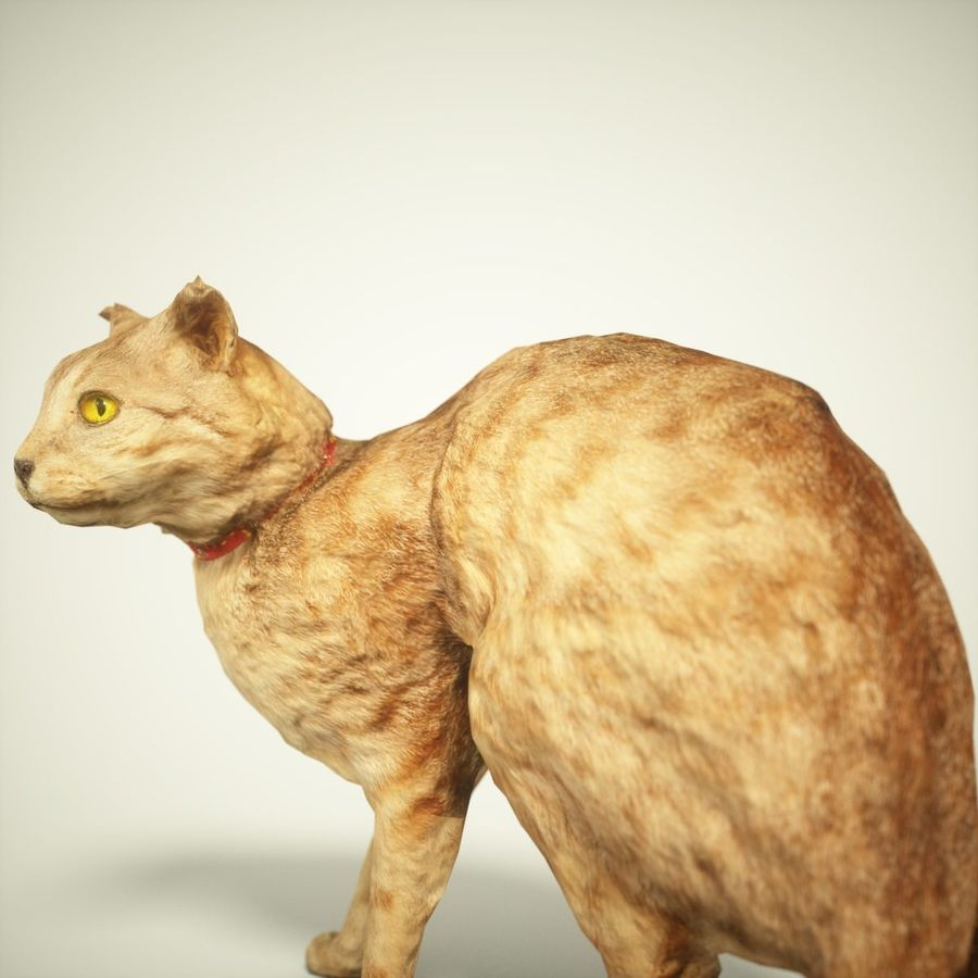 猫模型 royalty-free 3d model - Preview no. 5