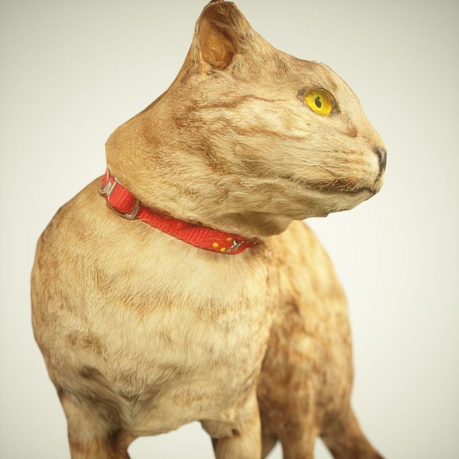 猫模型 royalty-free 3d model - Preview no. 4