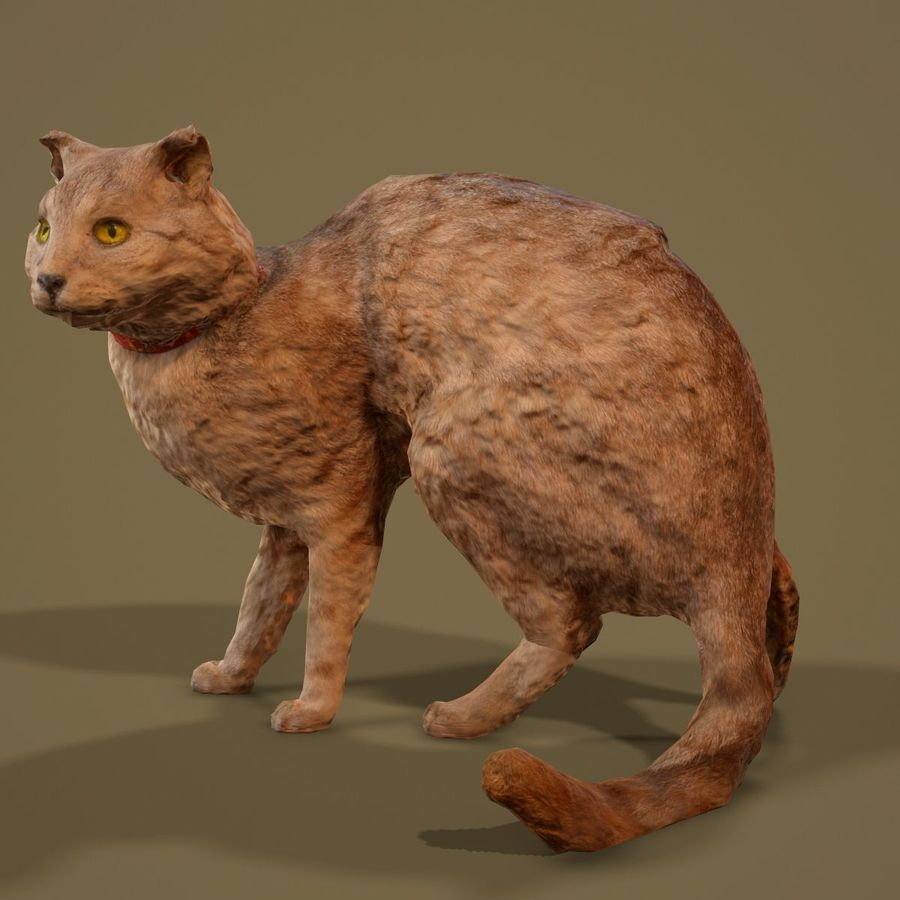 猫模型 royalty-free 3d model - Preview no. 7