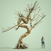 Stylised Dead Tree 8 3d model