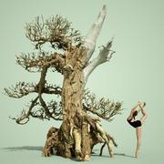 Stylised Dead Tree 3 3d model