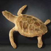 Kaplumbağa Modeli 3d model