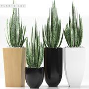 植物103 3d model