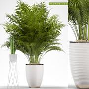 rośliny 101 3d model
