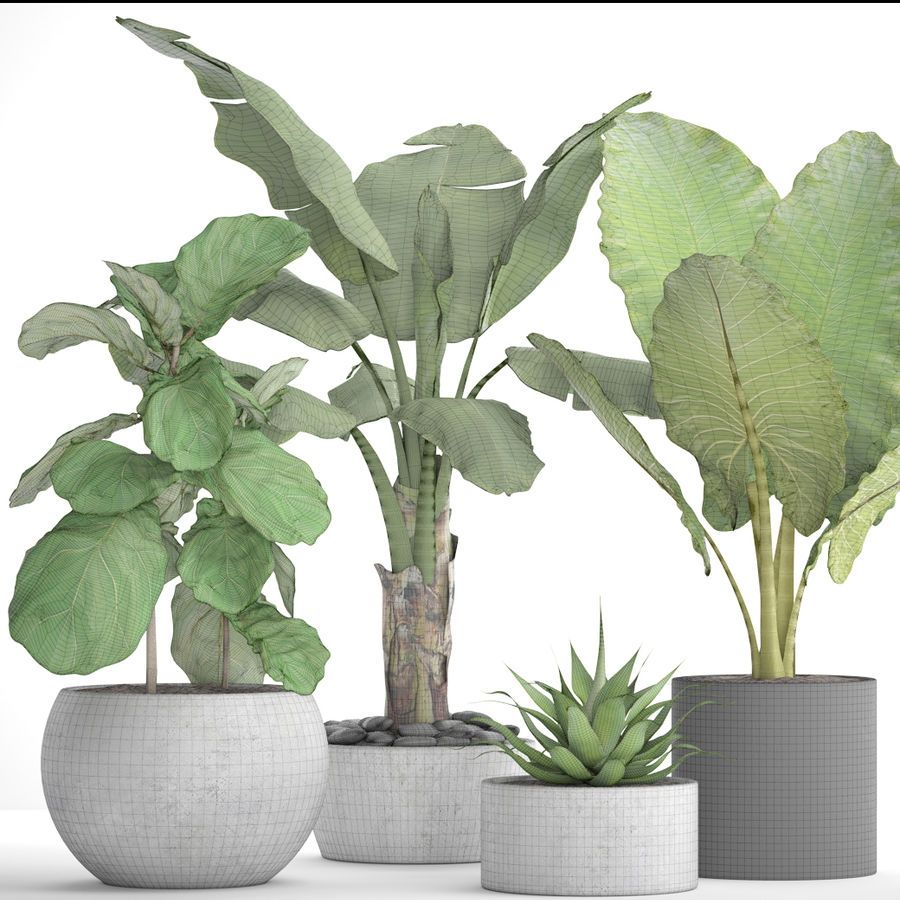 Plantes de collecte royalty-free 3d model - Preview no. 11