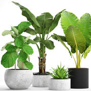 Collection plants 3d model