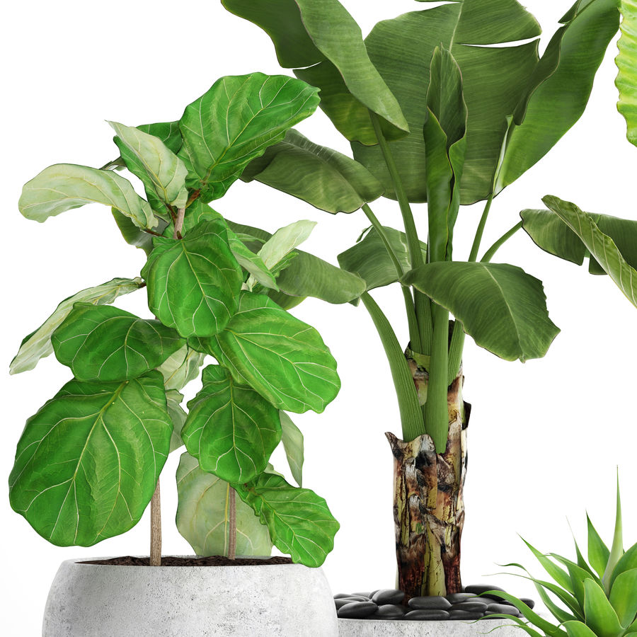 Plantes de collecte royalty-free 3d model - Preview no. 2