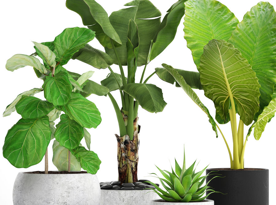 Plantes de collecte royalty-free 3d model - Preview no. 5