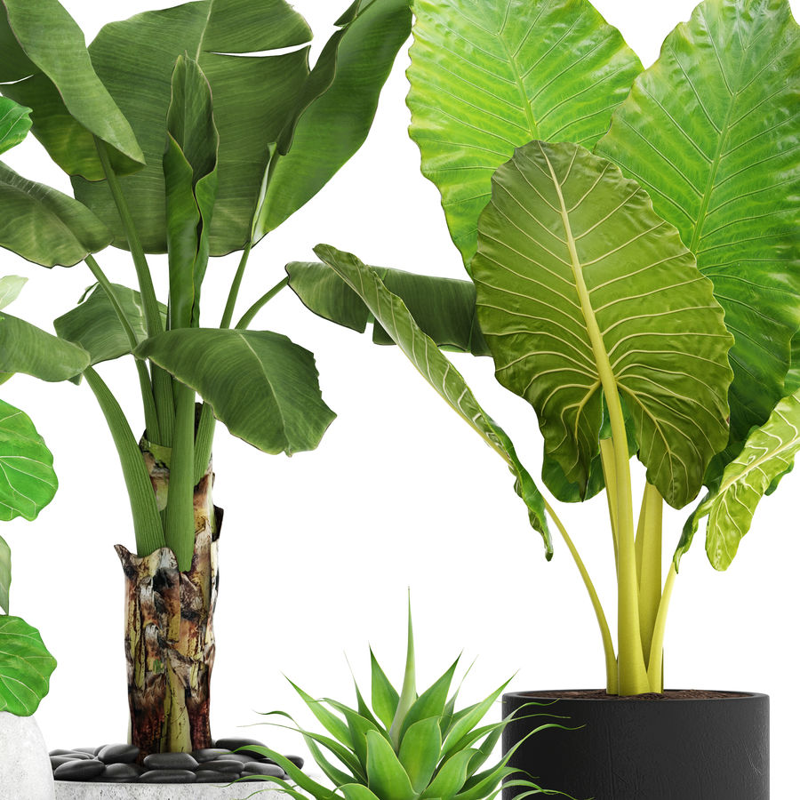 Plantes de collecte royalty-free 3d model - Preview no. 3