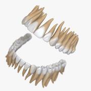 Stilize Dişler 3d model