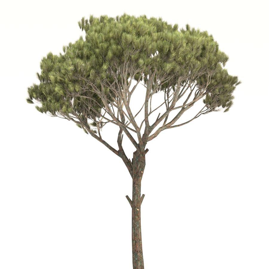 松树 royalty-free 3d model - Preview no. 3