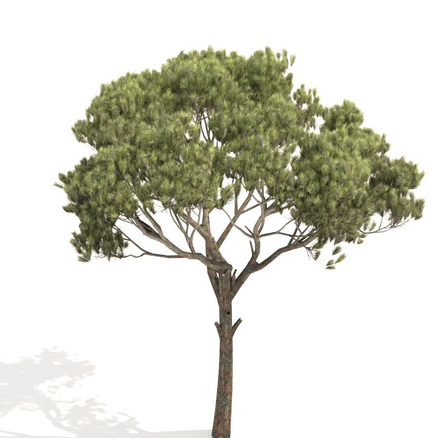 松树 royalty-free 3d model - Preview no. 5