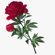peonia red_v2 3d model