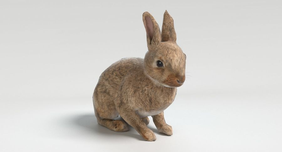 lapin royalty-free 3d model - Preview no. 9