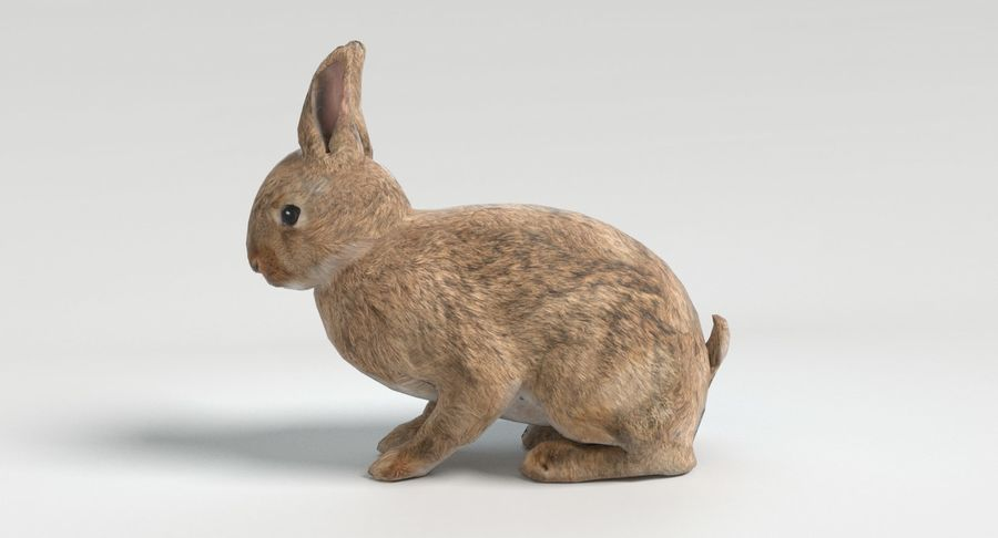 lapin royalty-free 3d model - Preview no. 7