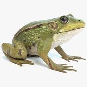 La grenouille 3d model