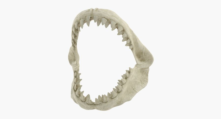 Great White Shark Jaw Bone royalty-free 3d model - Preview no. 2