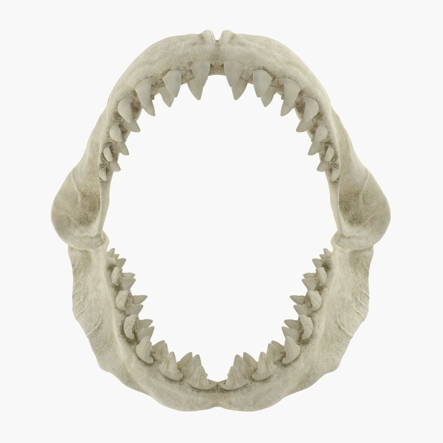 Great White Shark Jaw Bone royalty-free 3d model - Preview no. 3