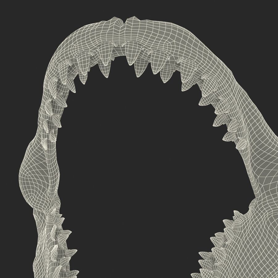 Great White Shark Jaw Bone 3D Model royalty-free 3d model - Preview no. 20