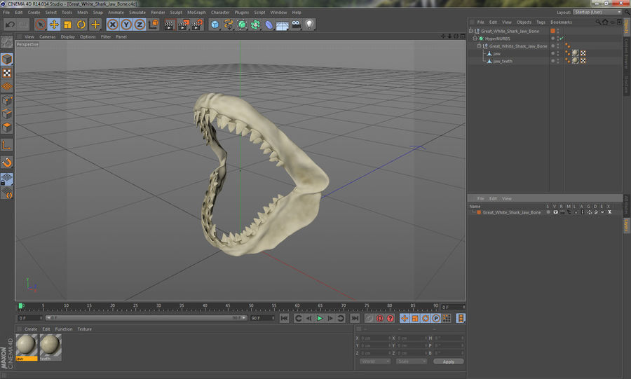 Great White Shark Jaw Bone royalty-free 3d model - Preview no. 16