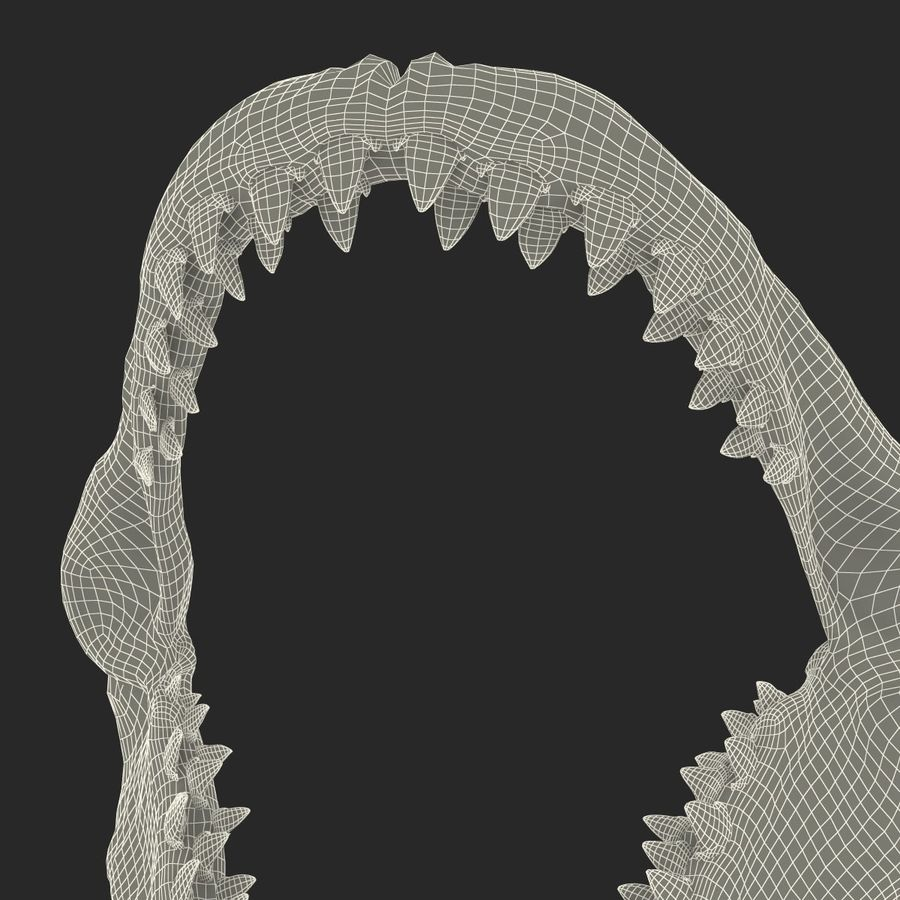 Great White Shark Jaw Bone royalty-free 3d model - Preview no. 20