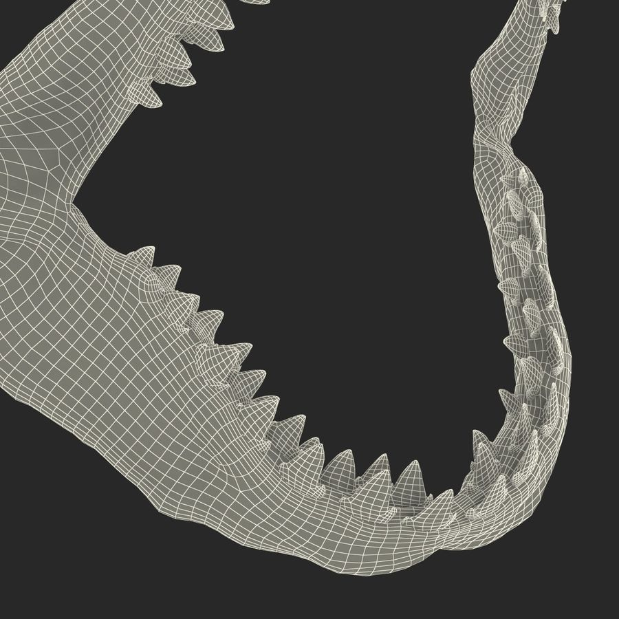 Great White Shark Jaw Bone royalty-free 3d model - Preview no. 21