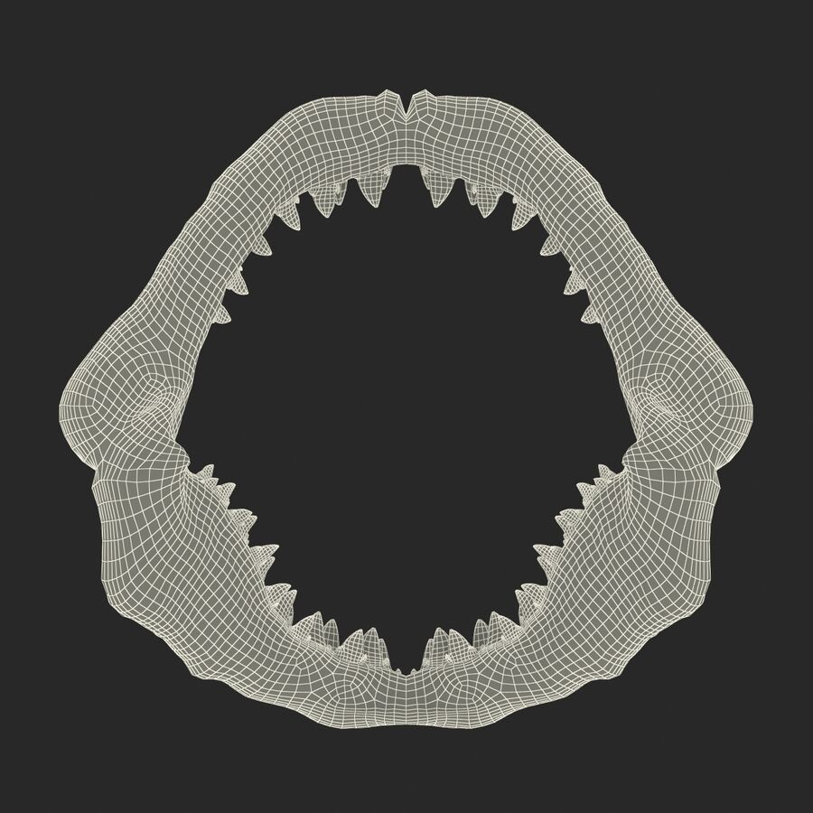 Great White Shark Jaw Bone 3D Model royalty-free 3d model - Preview no. 19