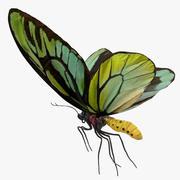 Queen Alexandras Birdwing Flying Pose 3d model