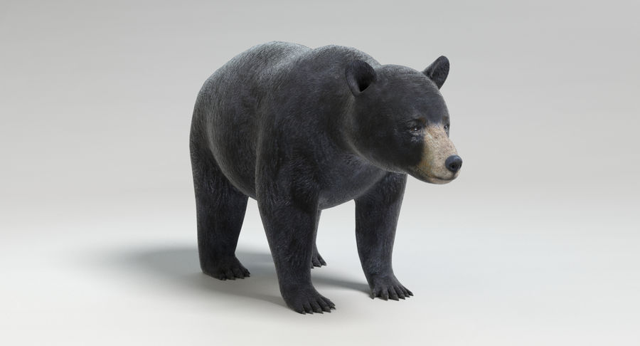 Black Bear royalty-free 3d model - Preview no. 9