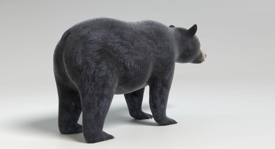 Black Bear royalty-free 3d model - Preview no. 5