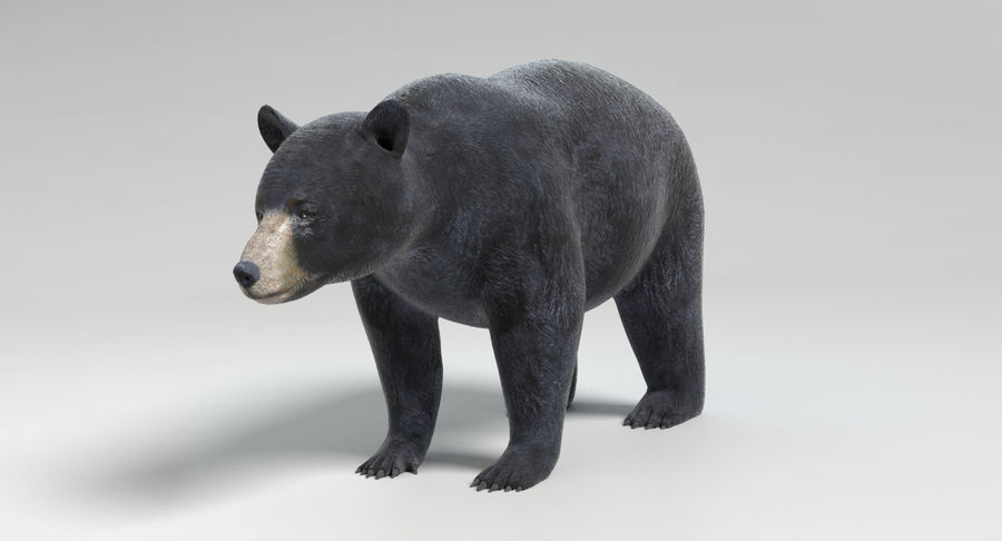 Black Bear royalty-free 3d model - Preview no. 8