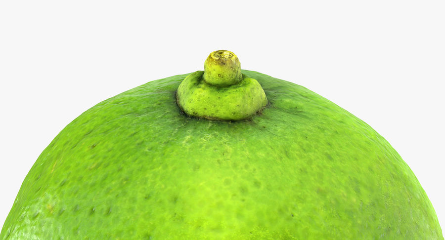 Whole Lime royalty-free 3d model - Preview no. 6