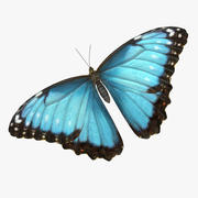 Butterfly Morpho Peleides with Fur 3d model