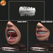 Oral Cavity Anatomy 3d model