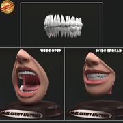 口腔解剖学 3d model
