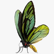 Butterfly Ornithoptera Alexandrae 3d model