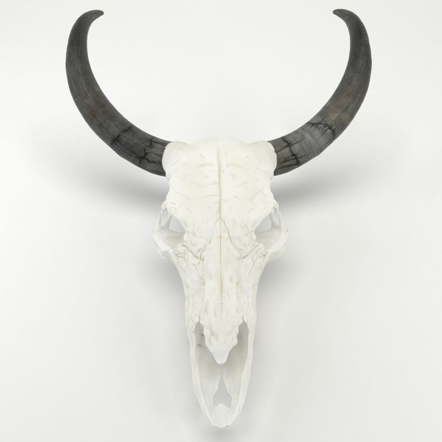 Bull Skull royalty-free 3d model - Preview no. 3