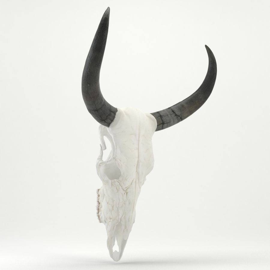 Bull Skull royalty-free 3d model - Preview no. 6
