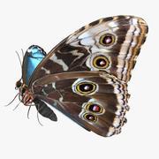 Kejsarefjäril med päls 3d model