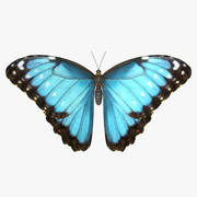 Morpho Butterfly comune 3d model
