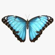 Common Morpho Butterfly 3d model