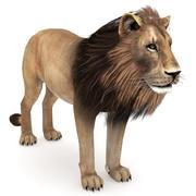 ライオン低ポリ 3d model
