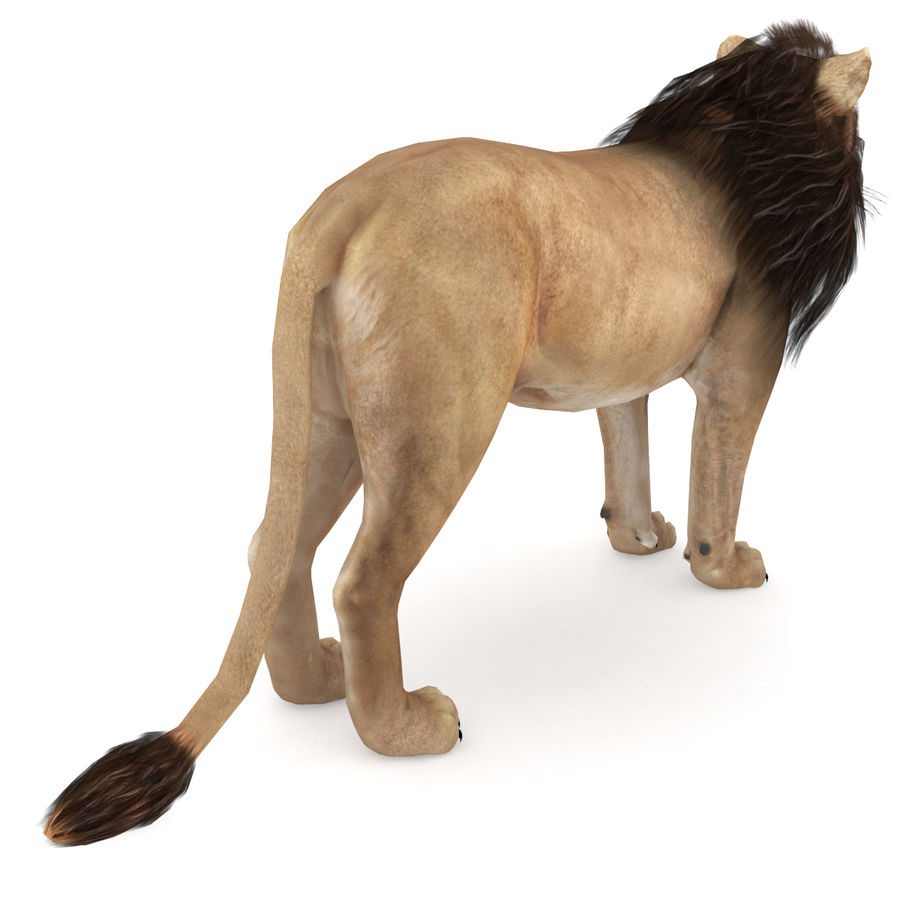 Lion Low Poly royalty-free 3d model - Preview no. 3