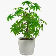 Pflanze im weißen Topf 3d model
