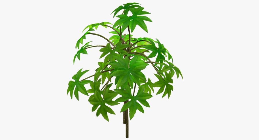Small Plant royalty-free 3d model - Preview no. 6