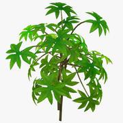 Planta Pequena 3d model