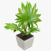 Small Palm in Square Pot 3d model