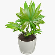 Small Palm in Pot 3d model