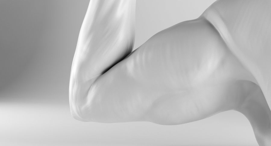 Arm Anatomy royalty-free 3d model - Preview no. 9
