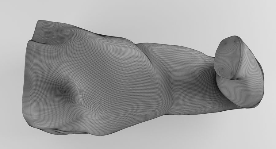 Anatomía del brazo royalty-free modelo 3d - Preview no. 29